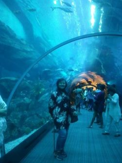 Two years ago, in the acquarium of Dubai Mall.