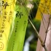 茂原七夕祭り 千葉の夏祭りの日程・アクセス・屋台の出店情報