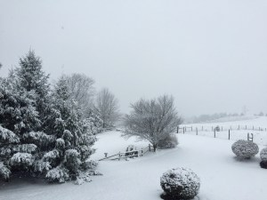 January 2015 view from the deck