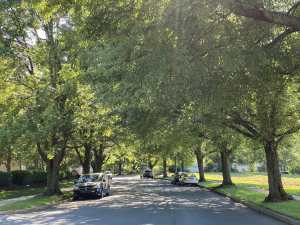 Lemon Stree between Moravian Manor and downtown Lititz is beacutifully shaded by a variety of trees.