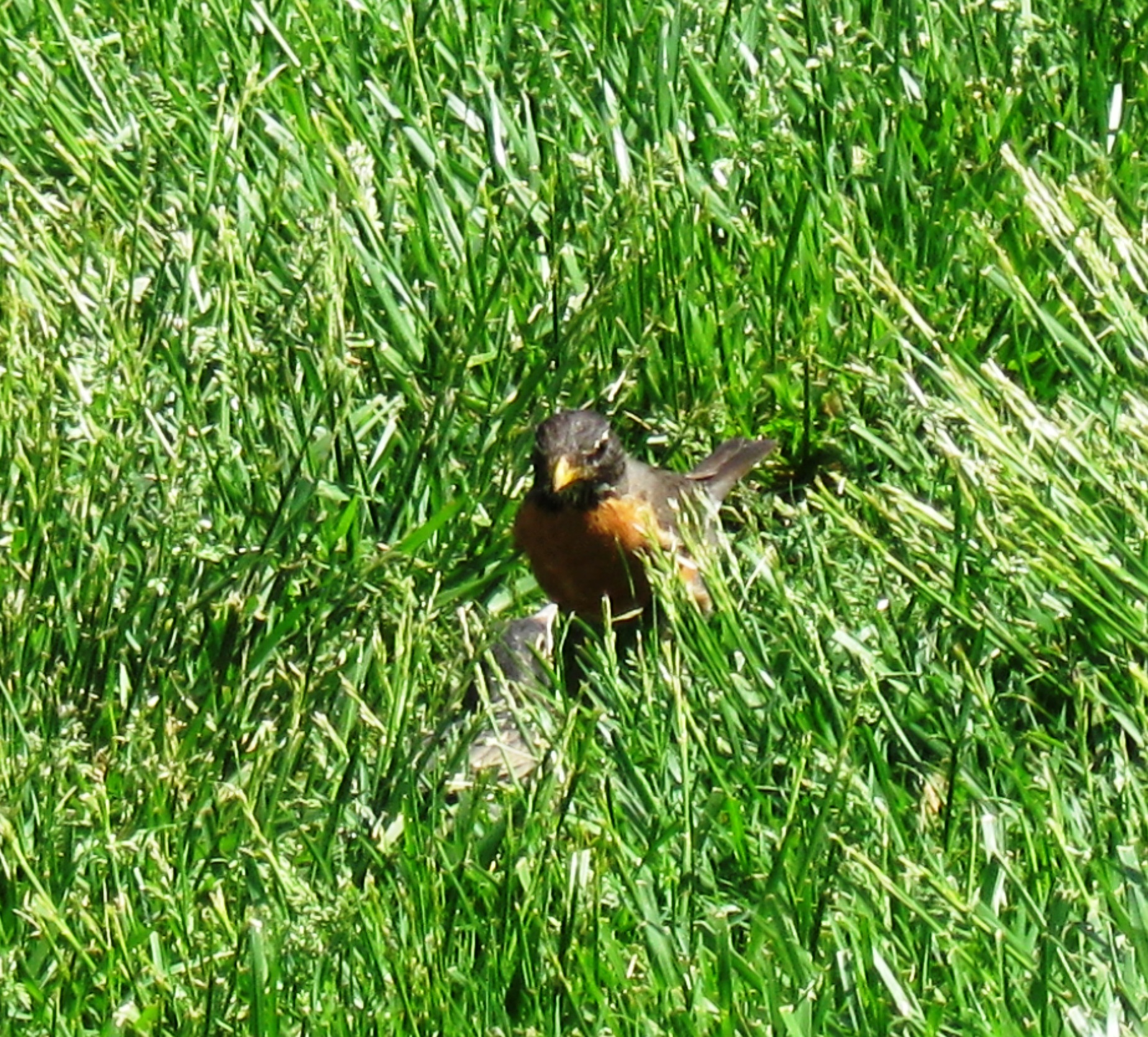 Photo Friday – First Day Out of the Nest