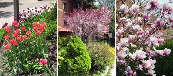 Spring has sprung, flowers in full bloom