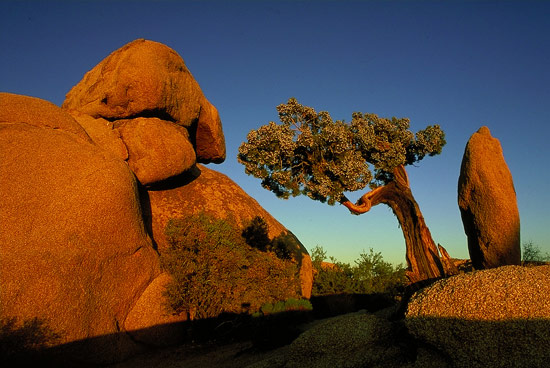 The warm light of the sun set in Joshua Tree National Park, California, USA.
