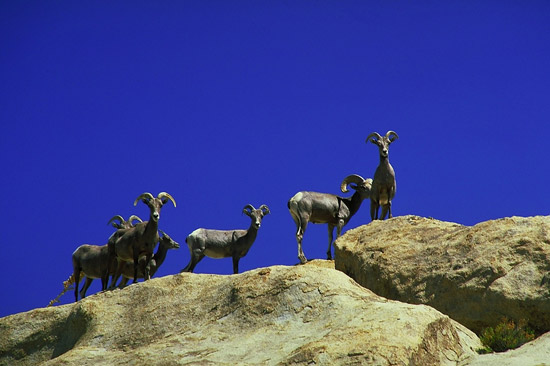 Animals in Joshua Tree National Park, California, USA