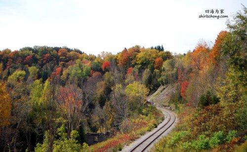 加拿大多伦多的彩色秋叶 (Autumn in Toronto)