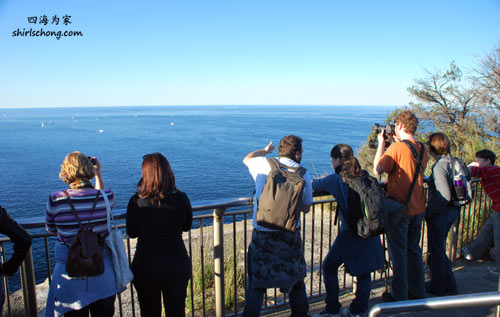 Whale Watching at North Head Lookout (Manly, Sydney)