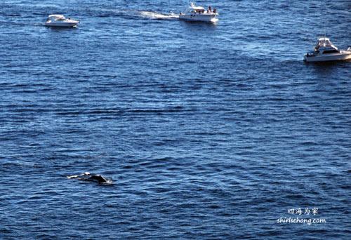 Whale Watching (Sydney, Australia)