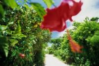 沖縄 旅行には行ってはいけない理由を15コあげてみました。
