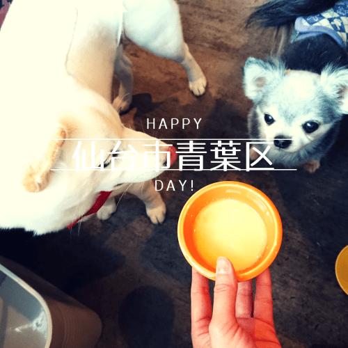 仙台ドッグカフェ、ウィズドッグ