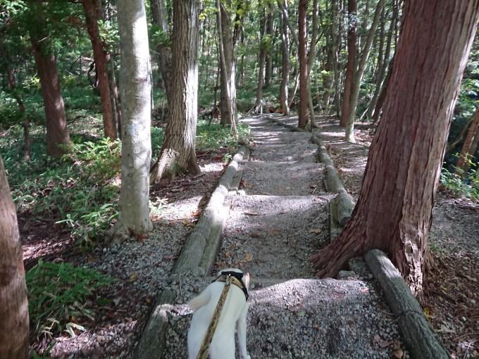 木々の間の散策路