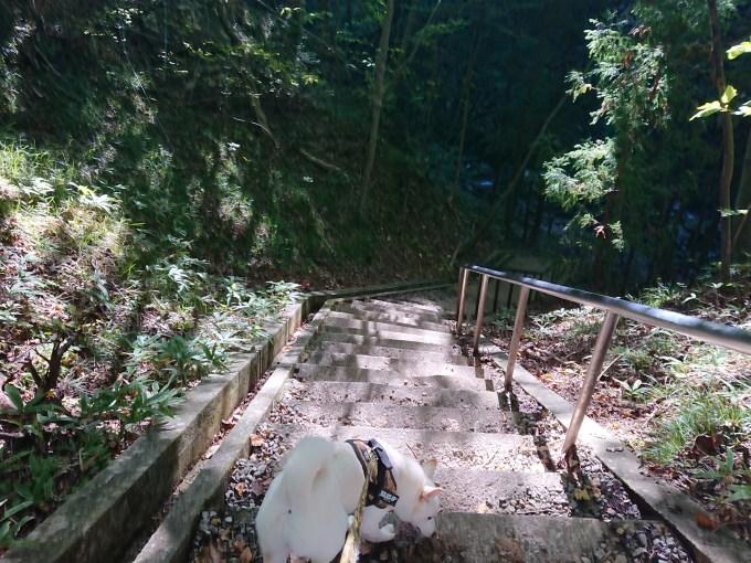 滝の近くにある階段