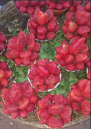 Tip of the day!! Store Fresh Strawberries