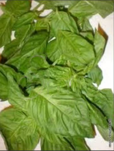 Tip of the Day!! Keep Your Basil Fresh