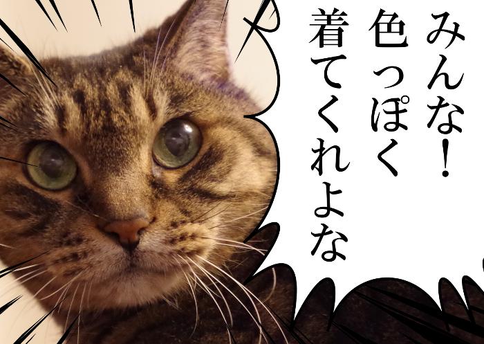 セクハラ猫からのお願い