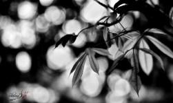 new leaves 2