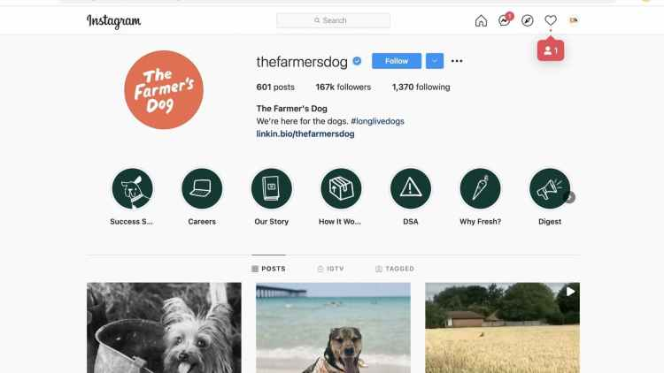 Promote Chewy products via Social Media Marketing