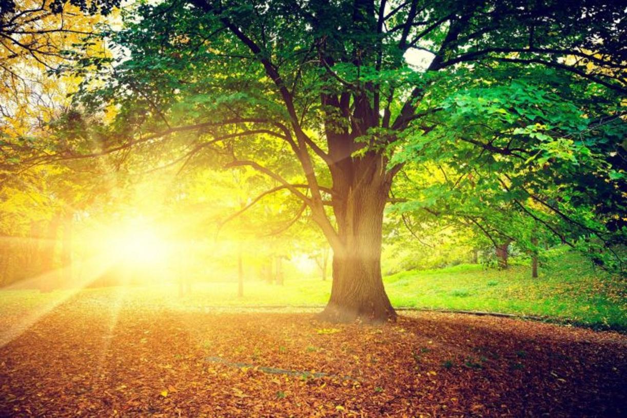 https://i1.wp.com/shivashaktibhava.files.wordpress.com/2018/03/enduring-nature-with-trees-fall-2-by-wallpaper.jpg?ssl=1&w=450