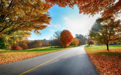 https://i1.wp.com/shivashaktibhava.files.wordpress.com/2018/07/highway-2560x1600-autumn-foliage-hd-5555.jpg?ssl=1&w=450
