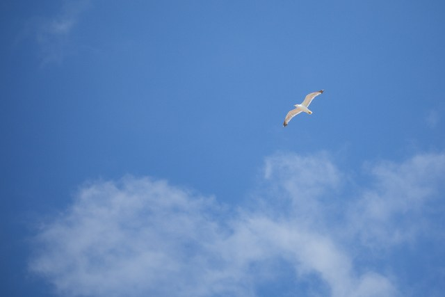Seagull flying effortlessly through the sky.