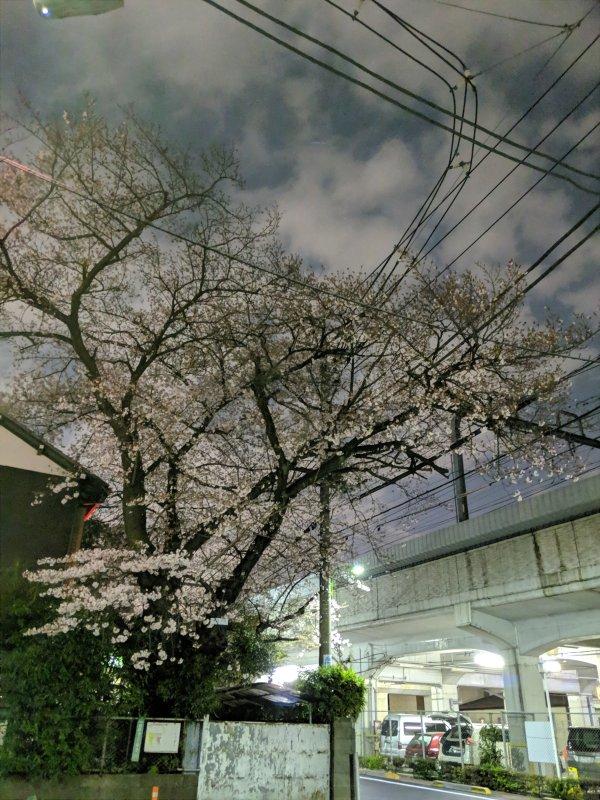 小田急線祖師ヶ谷大蔵付近の2019年桜(Pixel3夜間モード)