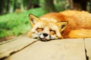 安心して寝ている動物