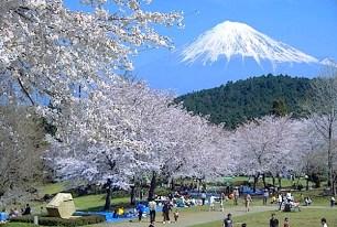 岩本山・桜
