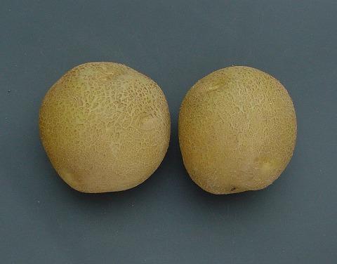 toyoshiro-potato