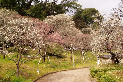 atami-plum-garden