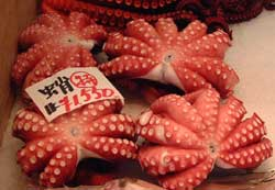 OCTOPUS-MADAGO-3