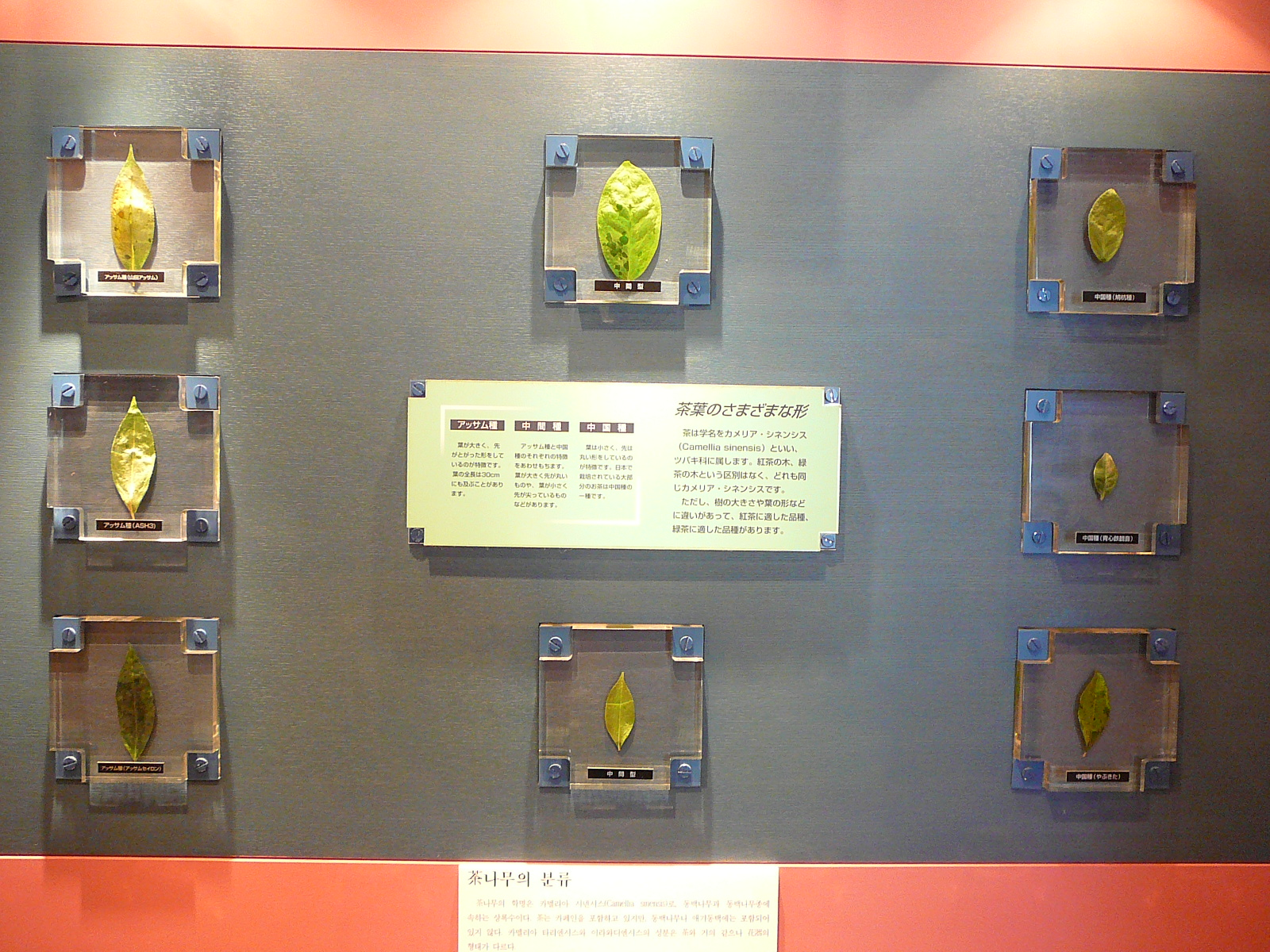 TEA-MUSEUM-4