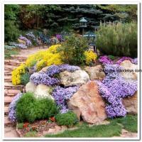 7 красивейших цветов для альпийской горки