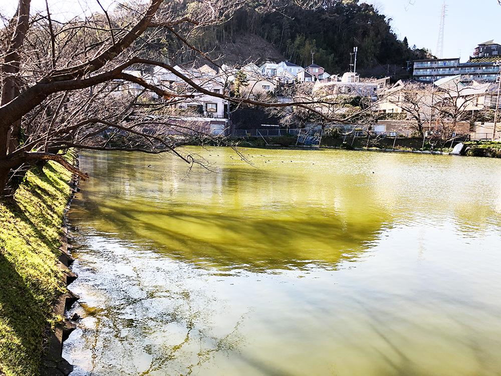 鎌倉市大船・谷戸池の様子