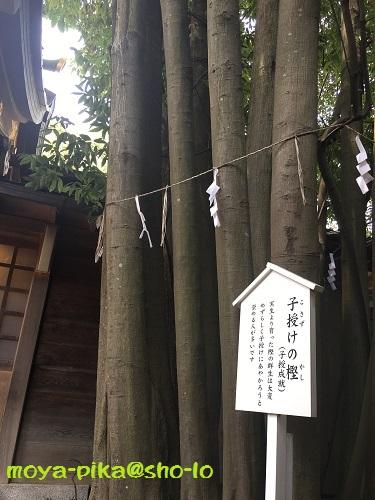 chiba-kemigawajinnja-23