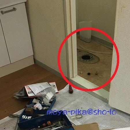 cockroach-toilet-1
