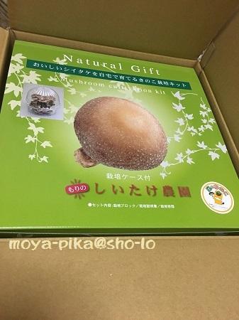 shiitake-saibai-2