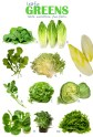 green-leafy-vegetables-list_624060