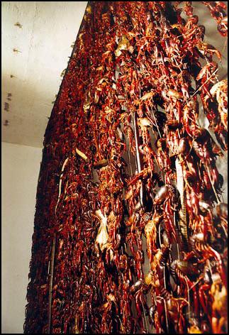 Rideau - 1999 - Peng Yu