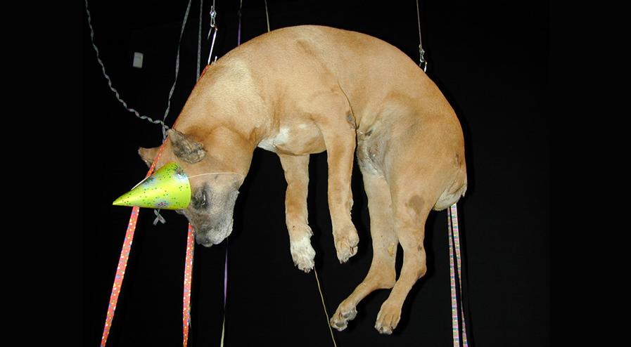 Jan FABRE - L'art suspendu qui a du chien