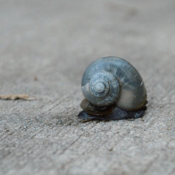 Snail-Clips6