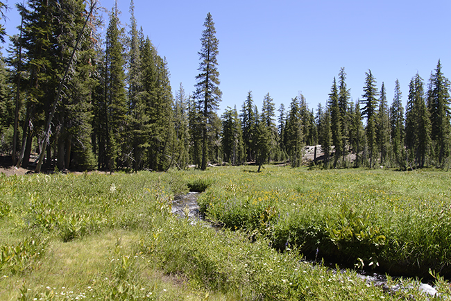 Meadows and Streams at Lassen Volcanic National Park