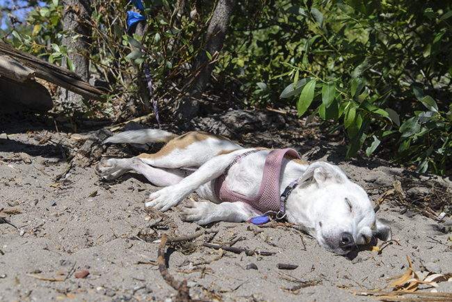 Olivia, Beach Bum
