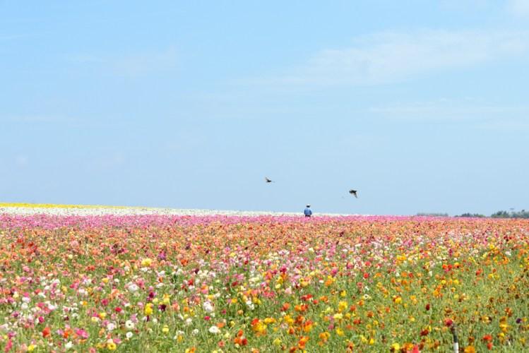 130504_flowerfields_alyxschwarz_01