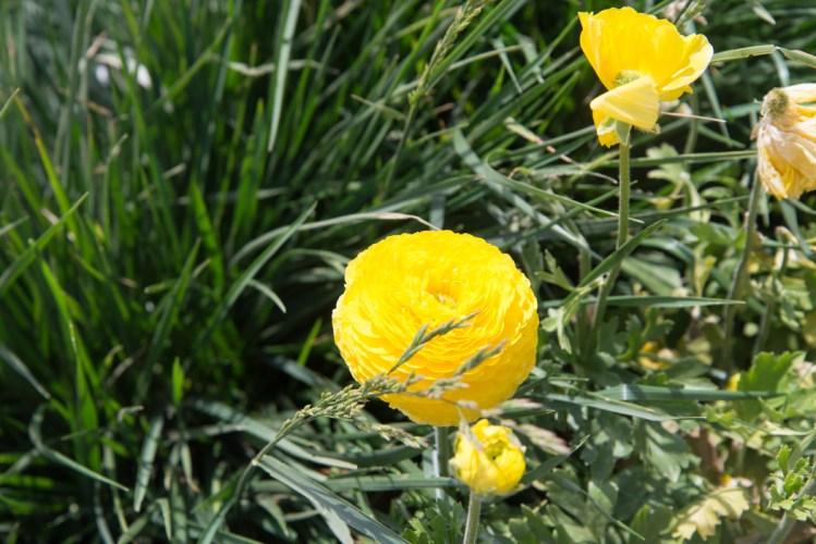 130504_flowerfields_alyxschwarz_03