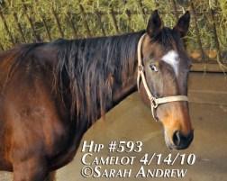 Horse with dreadlocked mane