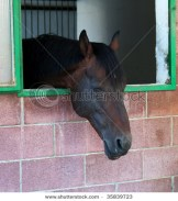 Sleeping horse, eyes closed