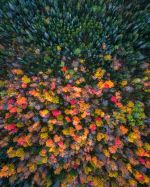 new-hampshire-drone-fall-colors-and-evergreens-by-michael-matti-581b62bc04aff__880