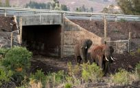 bridges-for-animals-around-the-world-42-58a579f4d3f3f__880