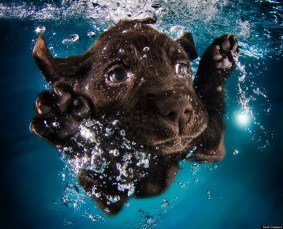 PuppySwimming