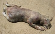 the-montauk-monster-washed-up-on-a-new-york-beach-in-2008-and-no-one-has-been-able-to-figure-out-what-exactly-it-is-or-was