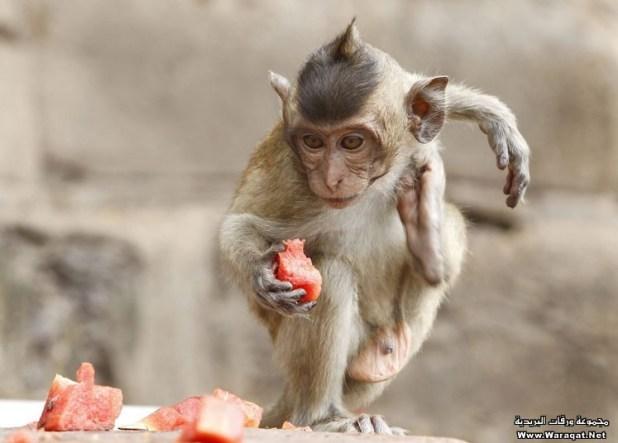monkey (10)